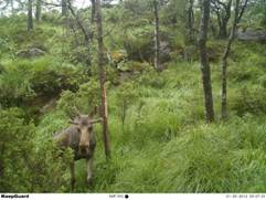 Full HD Digital MMS Trail Camera Game Camera That Sends Pictures To Phone